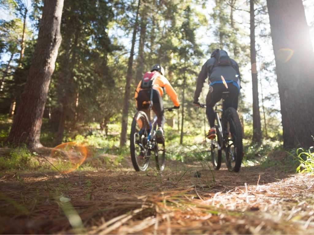two mountain bikers ride along along a forest trail