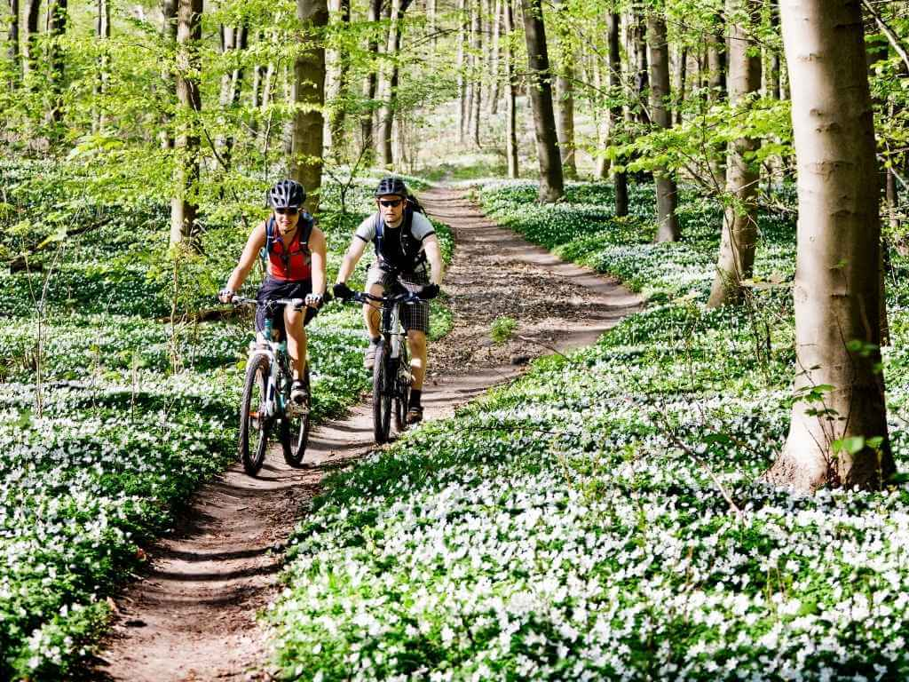 two mountain bikers riding through a forest